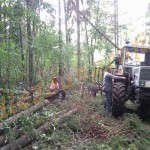 Nutzholzgewinnung