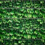 Weinblatt grün